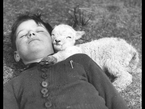 Counting sheep, the proven route to better sleep.